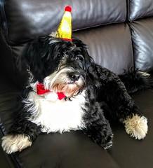 Happy 1st Birthday Sam !