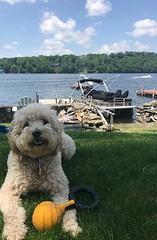 Mollie is a Gretta & Chewy puppy