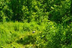 IMG_5802 (gidlark) Tags: flora plant grass green bird stork trees