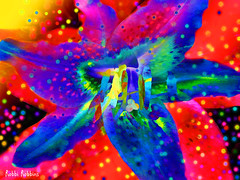 Lively Lilly (brillianthues) Tags: lilly flowers floral flower nature abstract colorful collage pattern photography photmanuplation photoshop