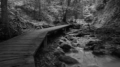 R1902810_1 (ivoräber) Tags: black white creek forest sony switzerland schweiz systemkamera swiss suisse