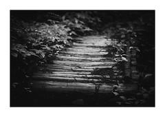 色の無い溜息ひとつ (gol-G) Tags: fujifilm xh1 fujifilmxh1 fujinon xf 90mm f20 xf90mmf20 digital bw japan 岐阜県 21世紀の森公園