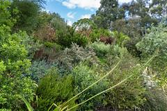 RHS Wisley gardens (tonybill) Tags: flowers june rhs rhswisley sonya7iii sonyfe28mmf2 surrey wisley bokeh