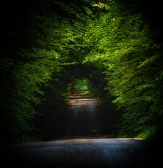 Lage Vuursche (http://www.paradoxdesign.nl) Tags: lage vuursche netherlands utrecht nederland holland dutch gooi road forest lane woodland woods sloaping sunlight summer landschap landscape tunnel