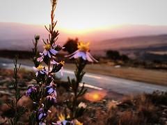 Sunset, Longtom Pass, Lydenburg, Mpumalanga (Dr. StefanSteyn) Tags: voyage africa road travel sunset nature fleur fleurs southafrica soleil roadtrip tourist voyager couchant mpumalanga escarpment étrange lydenburg longtompass blomme sonsondergang sonskyn afriquedesud kardashian