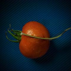 MacroMondays-24June19 (+Pattycake+) Tags: blue red macro fruit tomato cucumber vegetable mm macromondays ©patriciawilden2019 stylingfoodonafork stilllife closeup patterns indoor backlit shape ©patriciawilden artsypicpatty