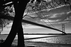 Humber Bridge (WolfBlass1) Tags: humberbridge eastcoast bridge humber mono blackandwhite water nikon d5300 shadow span nikkor 1685dxvr