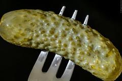 Forked (Dingens-Kirchen) Tags: gurke cucumber pickles gabel fork macromondays stylingfoodonafork