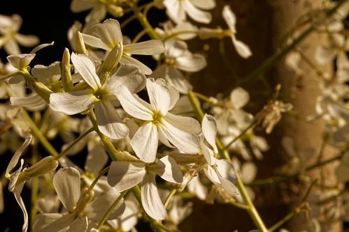 Blanc pur - Pure white