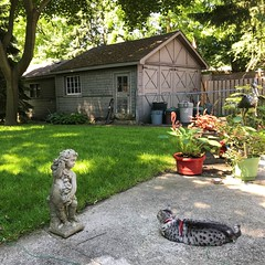 Pickles enjoys lying in the sun (Trinimusic2008 -blessings) Tags: trinimusic2008 judymeikle nature ontario canada summer june2019 hamilton trees architecture plants garage lawn cat mspickles fence egyptianmau