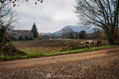 El reposo de las vacas (SantiMB.Photos) Tags: 2blog 2tumblr 2ig santjoanlesfonts garrotxa girona invierno winter camino way path sendero rural vacas cows geo:lat=4221437543 geo:lon=250409043 geotagged cataluna españa