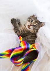 20190624_8752c (Fantasyfan.) Tags: kuunkissan european kitten pride rainbow fantasyfanin