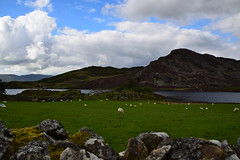 19SNO374 The larger of the Cregennen Lakes and Pared y Cefn hîr (bentolley1) Tags: wales snowdonia landscape lake mountain wall animal sheep