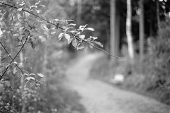 End of the Path Ahead (Petri Karvonen) Tags: path trail lakeside rantapolku film analog grain monochrome branch branches leaves leaf forest trees woods evening summer finland suomi kuopio kodak tmax400 400tmy bw blackandwhite olympus om2n zuiko 50mm 5014 f14 bokeh blur closeup särkilahti bench curve glow bright light nature