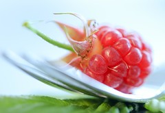 Raspberry (haberlea) Tags: home food fork fruit berry raspberry macromondays red stylingfoodonafork