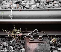 Eine Lösung aus dem Werkzeugkasten des Praktikers --- A solution out of the practitioner's toolbox (der Sekretär) Tags: detail eisen eisenbahngleis eisenbahnschiene faden gewächs gleis gleisbett gleise knoten metall objekte pflanze rohr rost schienen schlaufe schlinge schnur schotter schwelle stahl steine strick closeup cord gravel growth iron knot loop metal pipe plant railtrack rails railwaytrack rope rostig rust rusty stain steel stones string thread track trackbed tube verrostet roadbed