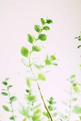 Long or Short 25/52 (lemanie73) Tags: week252019 startingtuesdayjune182019 52weeksthe2019edition 52 long plant green 52weeksproject