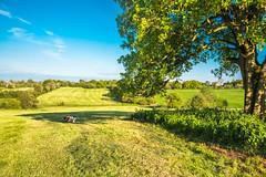 Mown meadow in sunshine (Bathsheba 1) Tags: uk england sunlight meadow hope bluesky grass tree sycamore summer landscape