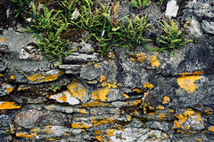 layers and layers (Fille.de.Lumière) Tags: lichen yellow yellowlichen fern wall stone layers drystonewall texture textures