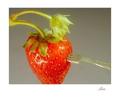 Giants are coming to tea! (jesse1dog) Tags: macromondays stylingfoodonafork strawberry fork dollshouse miniature prongs tabletop olympuszuikomacro50mm bokah vintageprime