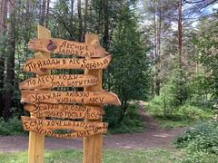 Россия. Урал 2019. Russia. Ural 2019. (svv.david) Tags: россия урал 2019 russia ural forest grass green tree heat summer sunny