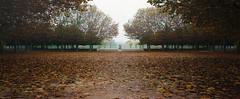 Autumn Aftermath (Dan Bardloom) Tags: park plaza trees leaves autumn warm red fog statue wide panorama landascape nature floor simmetry