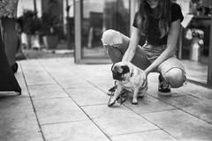 A party without a pug is possible, but meaningless (_LWR_) Tags: film analog 150 rodinal kodaktmax400 kamera 120er plaubelmakinaiiir party tmax pug mops