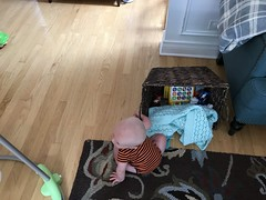 """Sam Plays with the Basket • <a style=""""font-size:0.8em;"""" href=""""http://www.flickr.com/photos/109120354@N07/48123041998/"""" target=""""_blank"""">View on Flickr</a>"""