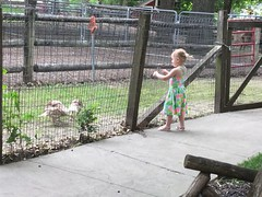 """Deanna Rose Children's Farmstead • <a style=""""font-size:0.8em;"""" href=""""http://www.flickr.com/photos/109120354@N07/48123126723/"""" target=""""_blank"""">View on Flickr</a>"""