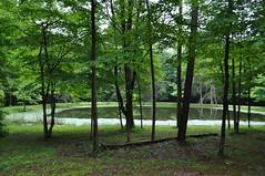Owen-Putnam State Forest (Owen County) (bernadette196) Tags: owencounty centerforruralengagement indianauniversity eppleyinstituteforparksandpubliclands eppley eppleyinstitute cre indiana uplandcounties forest owenputnamstateforest idnr owenputnam stateforest