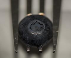 Styling food on a fork (Marlena W.) Tags: macromondays stylingfoodonafork