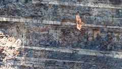 IMG_9700 (brian.a.stamper) Tags: animal bird cathartesaura newyork taughannockfallsstatepark turkeyvulture trumansburg unitedstatesofamerica