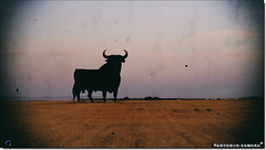 El Toro (Antonio Zamora) Tags: antoniozamora paisaje paisajes landscape landscapes verano summer toro bull bulls toros negro black photoshop spain españa canon ixus castillalamancha sky skies lamancha llanura manchuela nature cielo zoom ocaso sun sol sunset sunsets atardecer atardeceres hdr