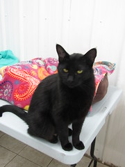 Junior - 3 year old neutered male