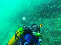 Underwater selfie (TonyXbox) Tags: underwater diving scuba ocean fish bluewater eurobodalla southcoast