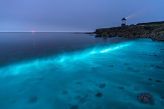 'In Bloom' - Anglesey (Kristofer Williams) Tags: bioluminescence plankton bioluminescent waves night beach lighthouse anglesey penmon phenomenon nightscape