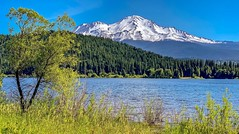 View of Mount Shasta from Lake Siskiyou in Northern California (lhboudreau) Tags: lake water california mountshasta siskiyou lakesiskiyou shore snowcap snowcapped tree trees forest pine pines reservoir mountain mountainside grass outdoor outdoors landscape sky volcano dormantvolcano