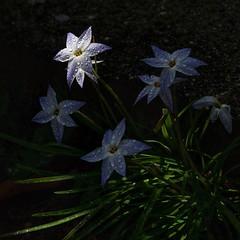 Point of Light (_Tana) Tags: sunlight light green white purple moody waterdroplets rain macro flowers