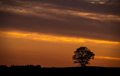 Tree hunting (explore) (Dan Fleury Photos) Tags: greaternapanee ontario canada cans2s tree sunset silhouette landscape 400mm sony napanee lennoxandaddington discover rural sideofroad