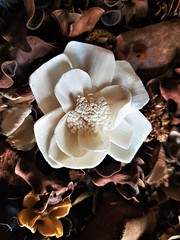 Wooden Flower In Pot Pourri (Gilli8888) Tags: northeast cameraphone samsung s7 galaxy flower flora bloom wooden potpourri