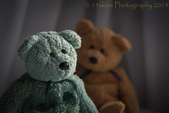 Staring (HTBT) (13skies) Tags: stare staring annoying behaving gerry barry bug teddybeartuesday playing pest trouble teddybears two sonya99 bears happyteddybeartuesday