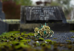 26 of 52 Weeks (Lyndon (NZ)) Tags: week262019 startingtuesdayjune252019 52weeksthe2019edition ilce7m2 sony masterton cemetery death flower dof grave winter abandoned low history