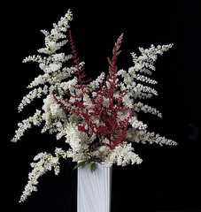 Astilbe (annabelleny Thank you for your many views and comm) Tags: flower floral astilbe bouquet garden spring annjacobson