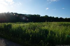 Sunny field (dustin.chew) Tags: henrycounty igersmidwest igersindiana nikon indiana rural woods