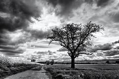 Expecting Rain... (Ody on the mount) Tags: albtrauf anlässe bäume canon drama felder fototour g7xii himmel landschaft pflanzen schwäbischealb wolken bw blackandwhite fields landscape monochrome sw schwarzweis tree kusterdingen badenwürttemberg deutschland