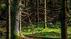 Niinisaari, East-Helsinki 🌴🌴 (Esa Suomaa) Tags: suomi finland trees tree trail path forest oldforest darkforest scandinavia planetearth europe earth olympusomd