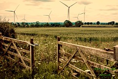 Gateway to Summer... (fionarosegunn) Tags: northamptonshire wildflowers wheatfield gate summer windturbines