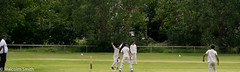 Howzat! (M C Smith) Tags: cricket white green grass umpire field playing sports appeal fence trees houses weeds pentax k3 fielders batsman bowler stumps light flats