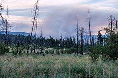 Approaching the Ashcroft Fire Zone (MIKOFOX ⌘) Tags: canada smoke trees wildfire forestfire grassland xt2 showyourexif burned learnfromexif july ashcroftfire landscape provia fire fujifilmxt2 mikofox britishcolumbia summer xf18135mmf3556rlmoiswr