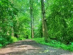 Wemmel-Beverbos-spring #3 (foto_morgana) Tags: arbres aurorahdr2019 belgië belgique belgium beverbos bomen bos brussel brussels brusselshoofdstedelijkgewest bruxelles forest foret iphonexsmax nature naturereserve natuur natuurreservaat on1photoraw2019 outdoor reservanatural réservenaturelle topazadjustai trees vzwnatuurpunt